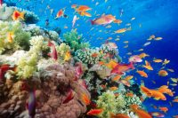 SNORKELING – FISHING IN THE SOUTH PHU QUOC