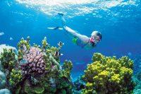 Phu Quoc Island Snorkeling