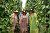 Visit Pepper Farm Free