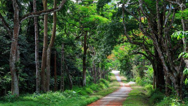 Get-Vietnam-visa-online-to-visit-Cuc-Phuong-National-Park