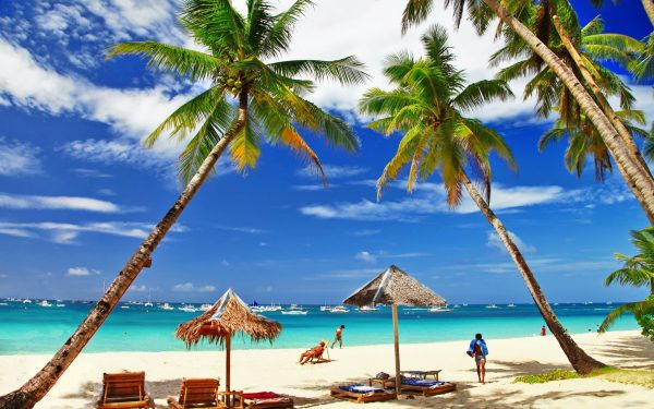 1517241160_palm-trees-and-beach-umbrellas